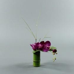 Bambou S - Orchidée courte fushia (80086)