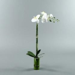 Bambou S - Orchidée longue blanc (80055)