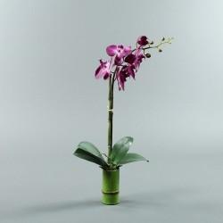 Bambou S - Orchidée longue fushia (80062)