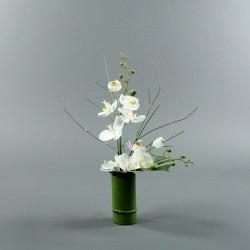 Bambou M - Orchidée double blanc (80123)