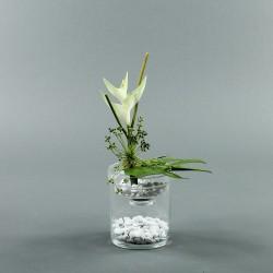 Exotic Aqua S - Heliconia blanc