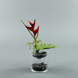 Exotic Aqua S - Heliconia rouge