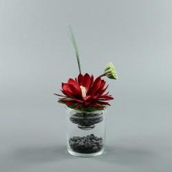 Exotic Aqua S - Lotus rouge, pod