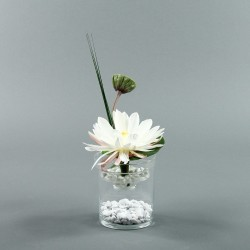 Exotic Aqua S - Lotus blanc, pod