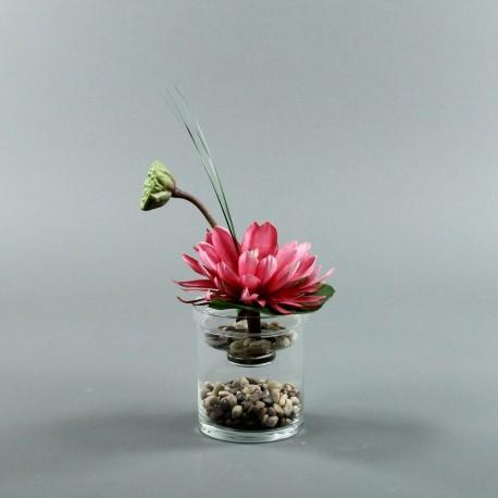 Exotic Aqua S - Lotus fushia, pod