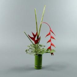 Bambou M - Heliconia rouge, Pendula rouge