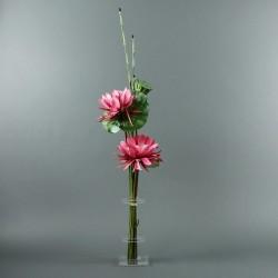 Flat M - Lotus fushia, pod