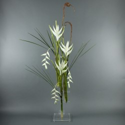 Flat XL - Heliconia blanc, Pendula blanc 172cm