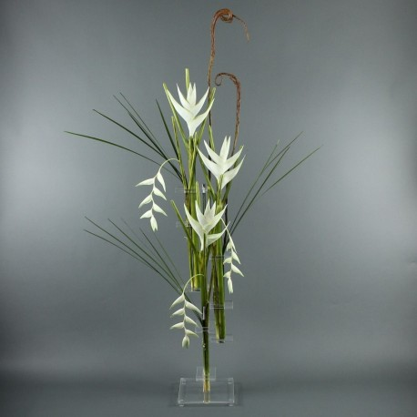 Flat XL - Heliconia blanc, Pendula blanc
