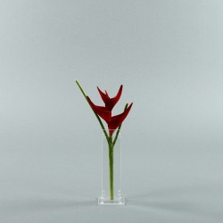 Para S - Heliconia rouge