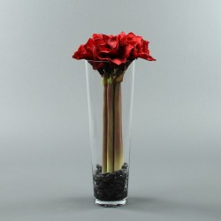 Conic L - Amaryllis x5 red 62cm