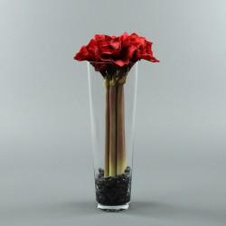 Conic L - Amaryllis x5 rouge