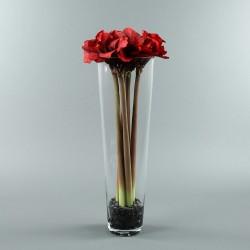 Conic XL - Amaryllis x6 rouge