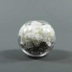 Boule M - Hortensia blanc