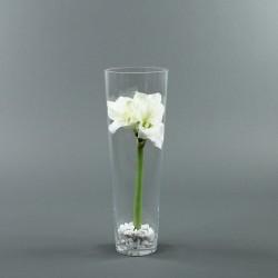 Conic L - Amaryllis blanc