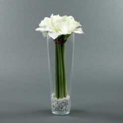 Conic L - Amaryllis x5 blanc