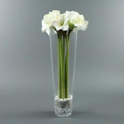 Conic XL - Amaryllis X6 blanc