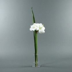 Flat S - Amaryllis blanc