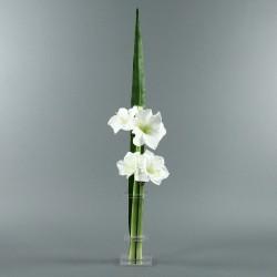 Flat M - Amaryllis blanc