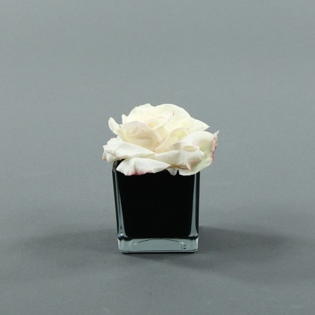 Cube S black - Rose Duchesse Champagne