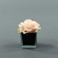 Cube S black - Rose Duchesse Rose