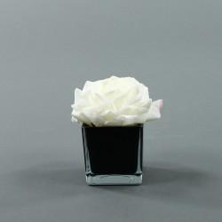 Cube S black - Rose Duchesse Blanc