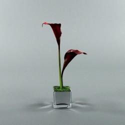 Cube S Blanc - Arum Rouge 39cm