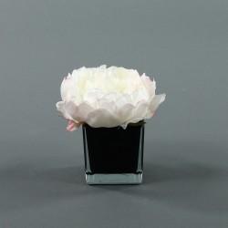 Cube S black - Pivoine Champagne
