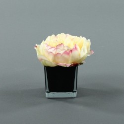 Cube S black - Pivoine Jaune