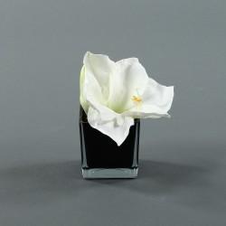 Cube S black - Amaryllis Blanc 17cm