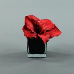 Cube S black - Amaryllis Rouge