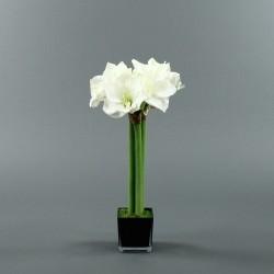 Cube M black - Amaryllis Blanc