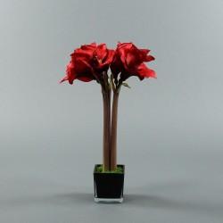 Cube M black - Amaryllis Red 53cm