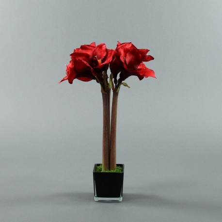 Cube M black - Amaryllis Rouge