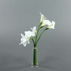 Para S - Arum blanc, Lys Amazone blanc