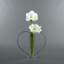 Para M - Amaryllis blanc