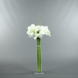 Socle Plexi L – Amaryllis blanc
