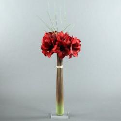 Socle Plexi L – Amaryllis rouge