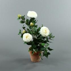 Pot en Terre Cuite - Camélia blanc, Lierre