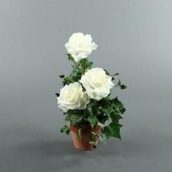 Pot en Terre Cuite - Rosier blanc, Lierre