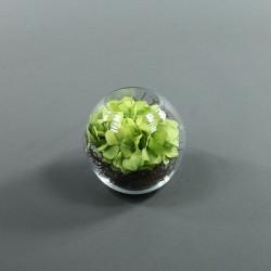 Boule M - Hortensia Vert, Splint