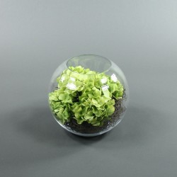 Boule XL - Hortensia Vert, Splint