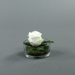 Cylindric bas - Rose blanc