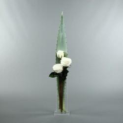 Para M - Aloe, Rose blanc