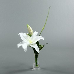 Conic S - Lys blanc