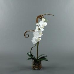 Cube M Clear - Orchidée blanc