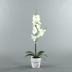Pot en Terre Cuite blanc - Orchidée blanc