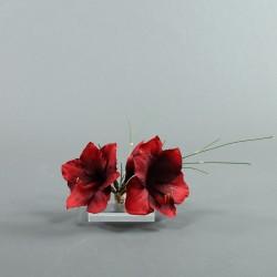 Socle Plexi S – Amaryllis rouge