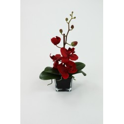 Cube S Black - Orchidée rouge 30cm