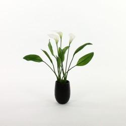 Arum 52cm en pot noir - Blanc